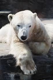 http://uplife.com.my/beruang-kutub-juga-tidak-dapat-melarikan-diri-daripada-kemurungan/?lang=ms&fc=abu7711