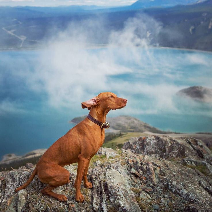 A #throwbackthursday to my windiest hike ever in the epic Kluane National Park. This is Sheep Mountain overlooking Kluane Lake. We ended the hike a little earlier than the peak because the hoomans were being blown sideways...I was perfectly solid of course! #exploreyukon #explorecanada #hikingdogsofinstagram #windy