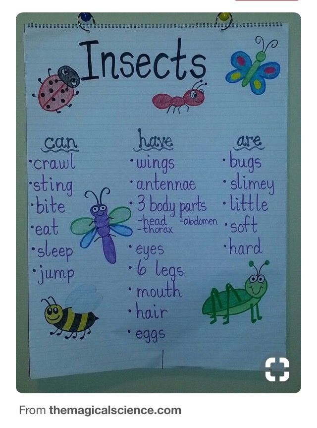 Mini Beasts Learning Links In 2021 Insects Preschool Insects Kindergarten Insect Activities Types of bugs for preschoolers