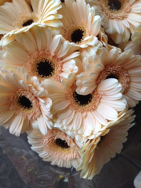 Mini Gerbera 'Cafe'...Sold in boxes of 30 or 60 stems from the Flowermonger the wholesale floral home delivery service.