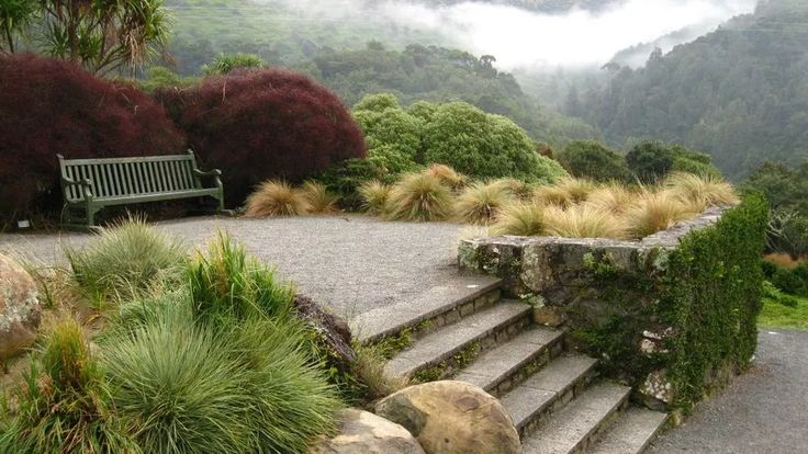 new zealand native garden - Google Search
