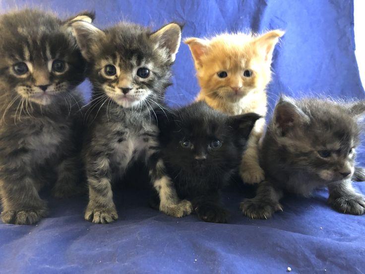 Pin On Schwarze Katzen 3