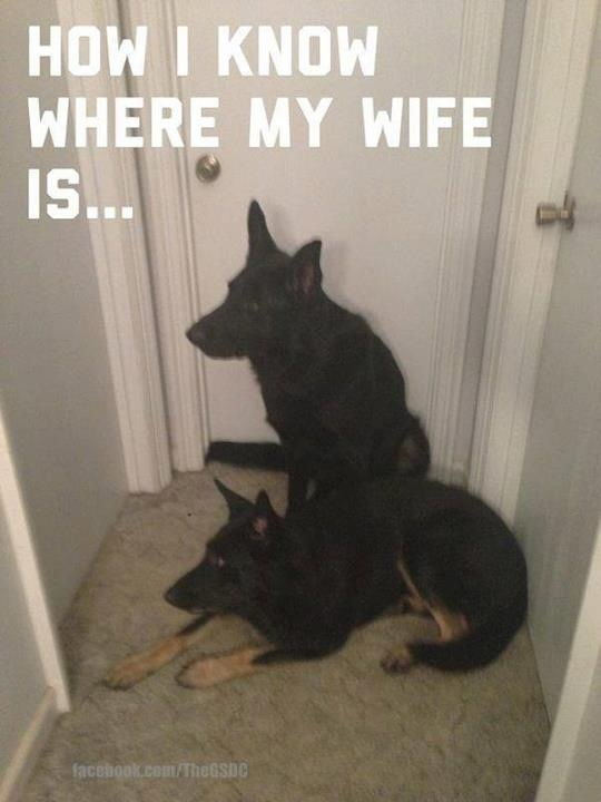 192 Best Images About Funny Dogs Dog Humor On Pinterest