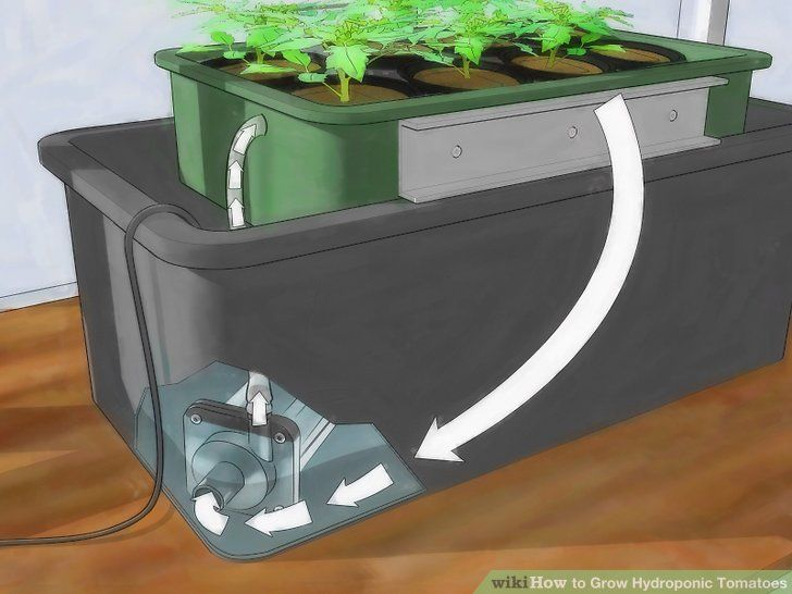 Grow Hydroponic Tomatoes Step 1