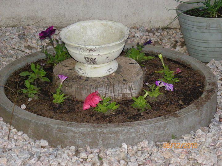 Lovely potted, gravel garden at back entrance - gone to hell in handbasket - requires restoration - July 2014 onwards