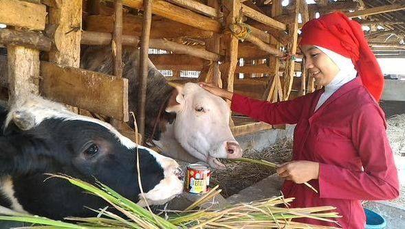 Foto kiriman Rini Indria Sudrajat  Sapi-sapiku sangat menggemaskan, memberi makan hewan ternak adalah suatu kebahagiaan #AnimalLoversEMCO