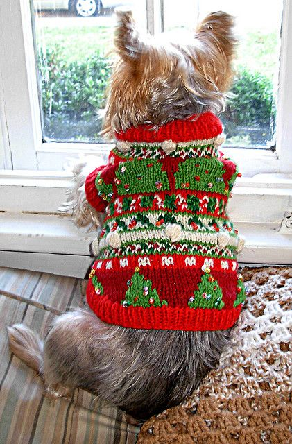 Christmas Trees by My Savannah Cottage knitted dog sweater pattern $6.00 on Ravelry at http://www.ravelry.com/patterns/library/christmas-trees-2