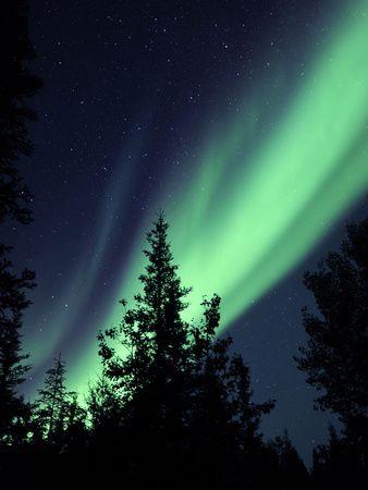 Aurora Borealis Above the Trees, Northwest Territories, Canada