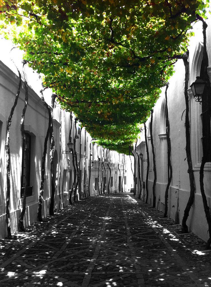 Gonzalez Byass Winery - Jerez de la Frontera, Spain
