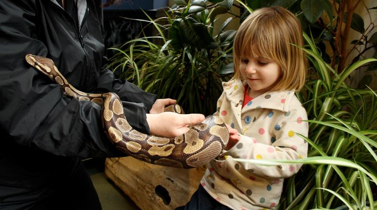 A young girl holding a snake at Africa Alive
