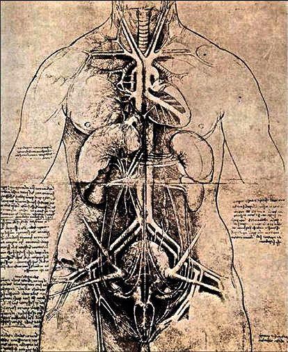 Leonardo Da Vinci. Anatomical Drawings.