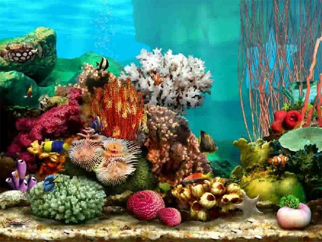 tropical fish tank murals | Experience fish in their natural habitat among the coral reef, as they ...