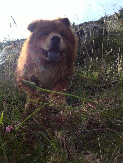 El oso de la montaña!