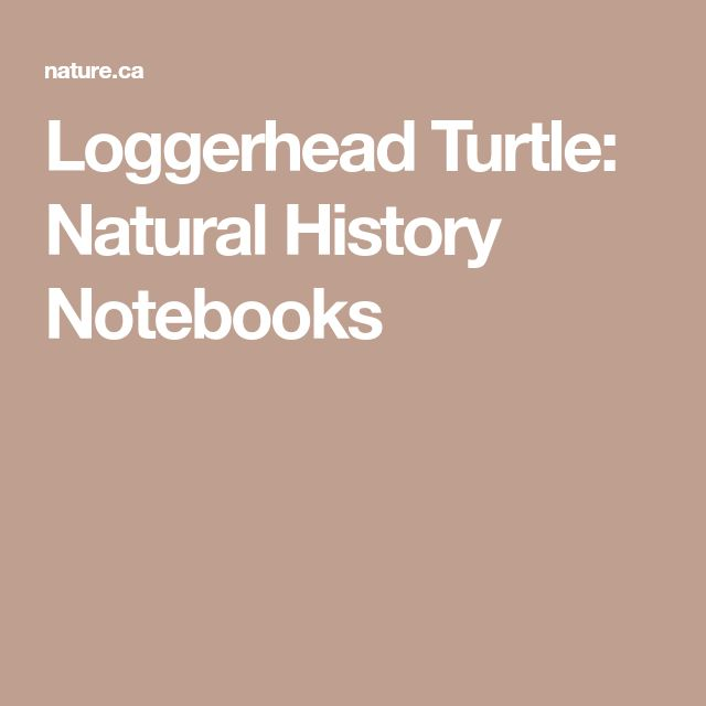 Loggerhead Turtle: Natural History Notebooks