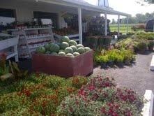 Just getting ready for Fall  Locally grown Fall Mums have arrived!