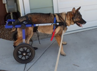 MWD Emir, Military service dog, did 4 tours in Iraq