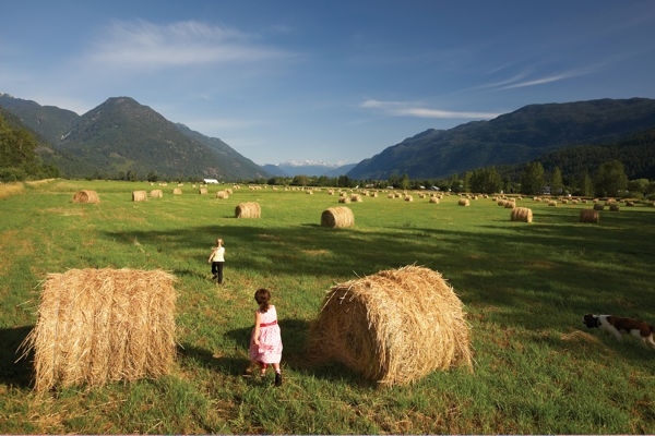 Kids playing in the hay fields of Pemberton Valley. Hay is needed for the Valley's equestrian population.