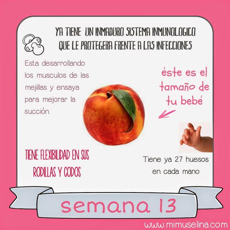 semana 13 embarazo