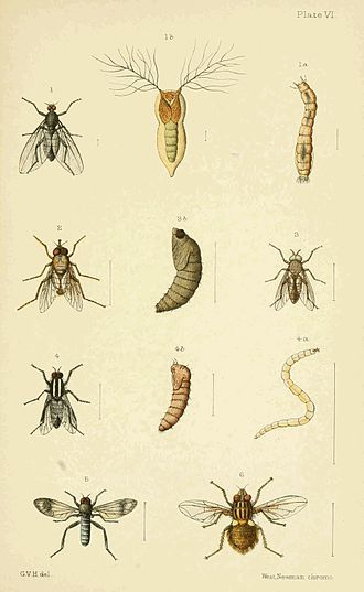 Image result for New zealand insects