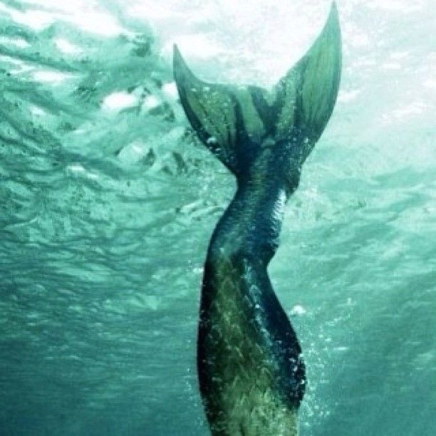 I'm gonna be a mermaid when I grow up!!!!!!!!!!!!!!