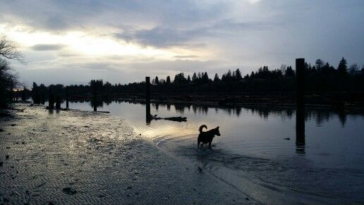 Dave the dog, shoreline, river and sky
