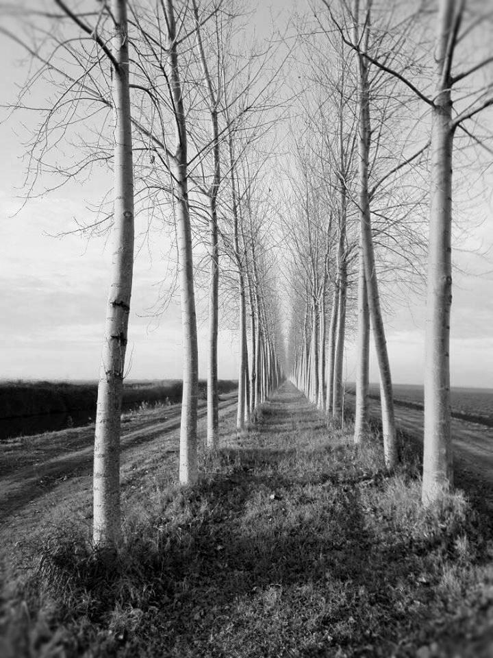 https://flic.kr/p/23rRB3t | Pianura Padana  verso Comacchio   - Black & White  #amoslocatiphotography  2018