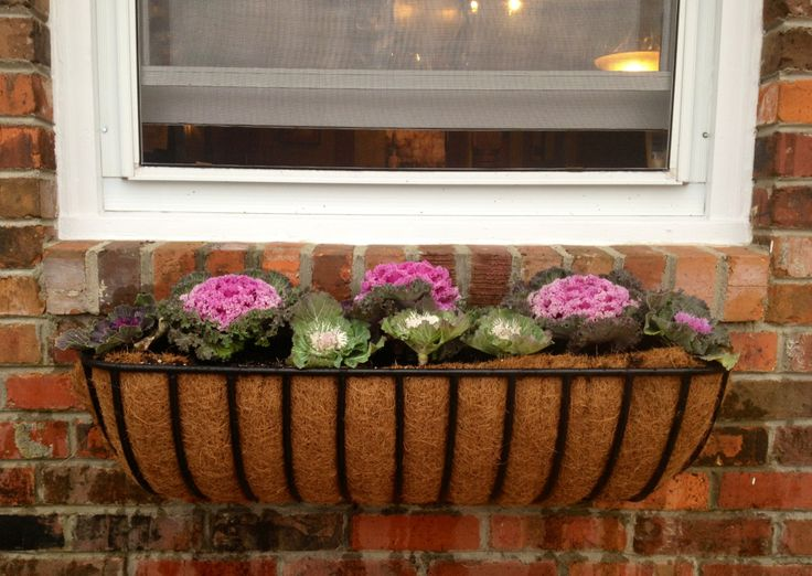 modern / simple iron window box container. Plant cabbage flowering kale in June/early July. A great way to bring color to the fall garden & the edible leaves make a nice garnish on the autumn table...