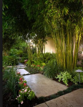 Bamboo reflecting and complementing the height of the building and connecting lower and upper garden...