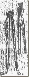 """Pinzas, tenazas, cizallas se utilizaban al """"rojo vivo"""", aunque también frías para lacerar o arrancar cualquier miembro del cuerpo humano, y eran otro elemento básico más entre las herramientas de todo verdugo. Las tenazas se utilizaban preferentemente ardiendo para las narices, dedos de las manos y pies y pezones. Las pinzas alargadas, servían para desgarrar o abrasar el pene."""