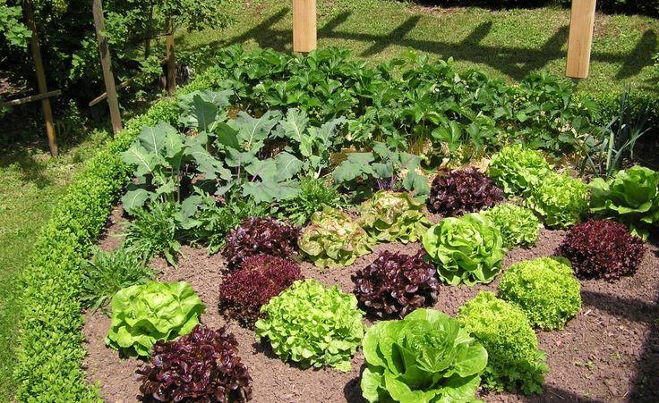 kuhles 7 nuetzliche eigenschaften von lavendel der blaue alleskoenner aus der natur sammlung bild der cabacccafefdeabbdd urban gardening green life