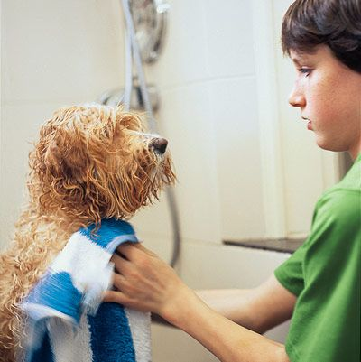Best 100 dog grooming tips images on pinterest dog grooming tips dog grooming tips how to plan a dog cleaning station a dedicated washing area for solutioingenieria Images