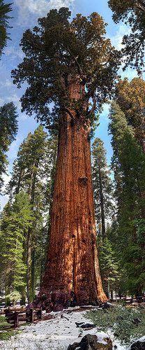 Old Sherman in Sequoia National Park