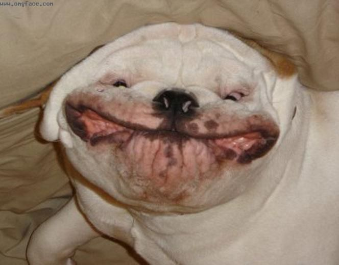 big smile animal - photo #36