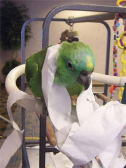 Have you bought your Parrot a fantastic new toy, but they won't go anywhere near it? Fear not, Barbara Heidenreich's blog has some advice for you.