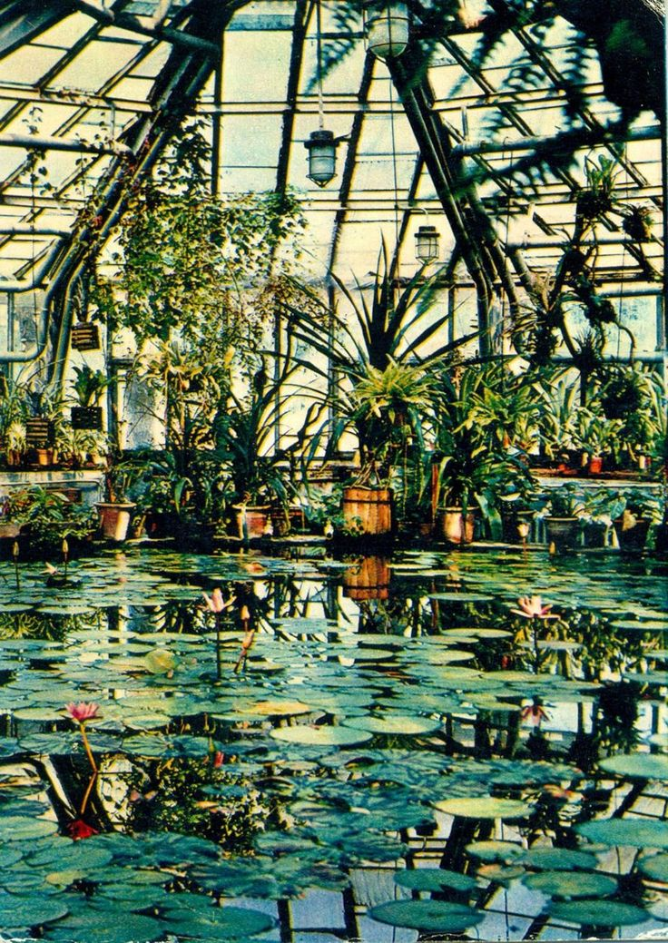 I'd love a greenhouse with a pond... // vintage photo of the moscow botanical garden