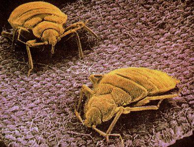 How do doctors treat dust mite health symptoms?