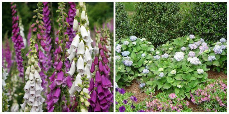 Let op: DEZE zeer giftige planten staan bij ontzettend veel mensen in de tuin en in huis!
