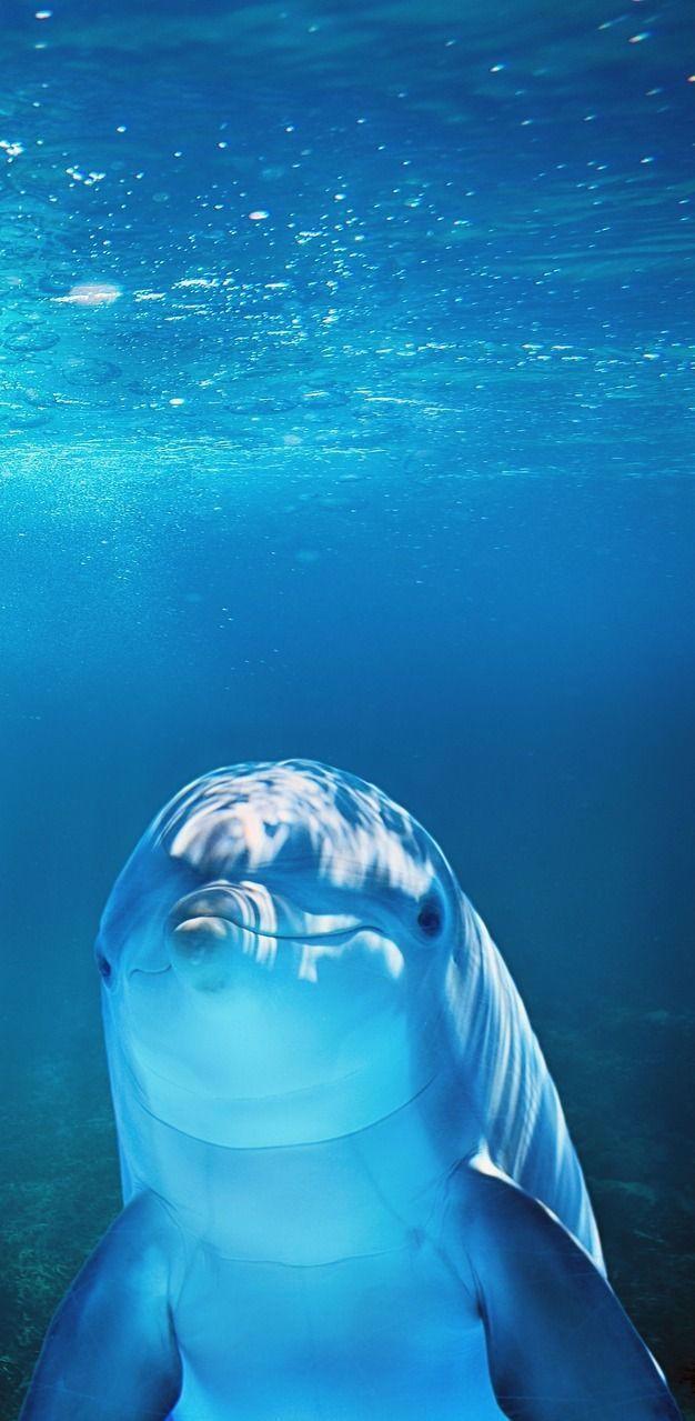 A Dolphin Underwater Dolphins Animals Seaanimals Mammals Helloworld In 2020 Underwater Animals Sea Animals Animals Wild