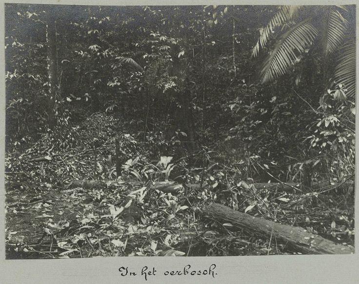 In het oerbosch, attributed to Hendrik Dooyer, 1906 - 1913