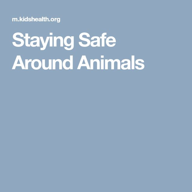 Staying Safe Around Animals