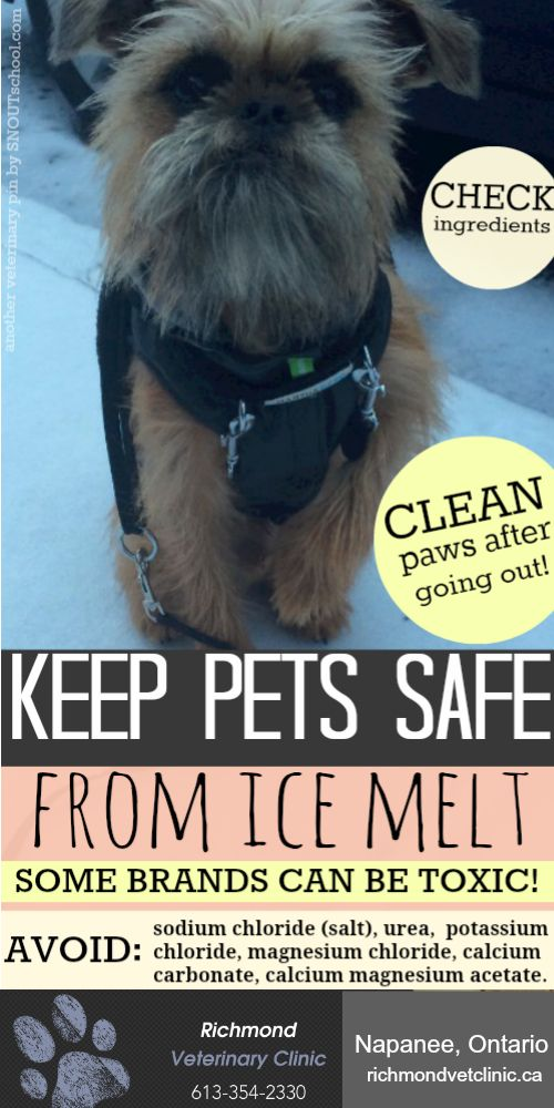 Good tips to keep your dog or cat safe from ice melts this winter! Some have toxic ingredients, cause stomach upset & more