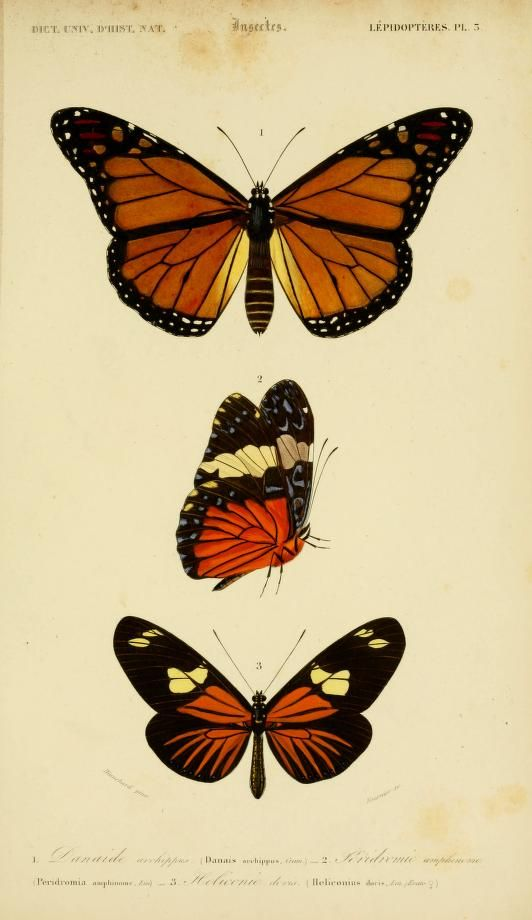 v. 2 1849 - Atlas (Zoologie - Reptiles, Poissons & Insectes) - Dictionnaire universel d'histoire naturelle : - Biodiversity Heritage Library...