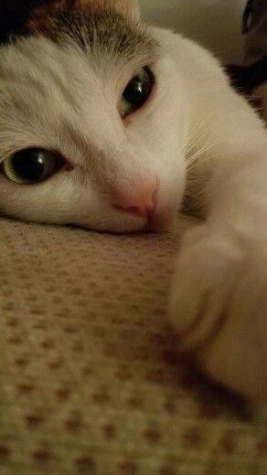 My bootiful kitty