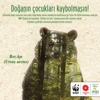 Ayılar, masallara konu olan, kimi zaman korku ve merakla takip ettiğimiz canlılardır. Boz ayılar, ülkemizde özellikle Doğu Karadeniz'de biyolojik çeşitlilik açısından büyük önem taşıyor. Kaçak avcılık ve yaşam alanlarının yok olması boz ayıların varlığını sürdürme olanaklarını daraltıyor. Sayıları giderek azalan boz ayıların korunması, hem yaşadıkları ormanların hem de ormanları mesken tutan diğer canlıların korunmasını sağlayacak.