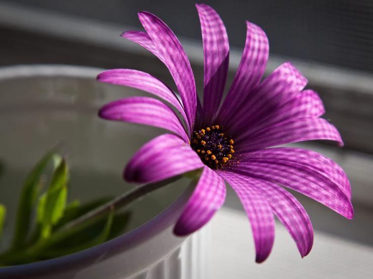 Best 25 Beautiful Flowers Wallpapers Ideas On Pinterest