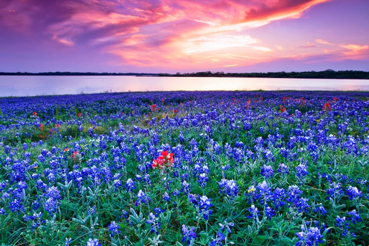 98 Best Images About Texas 100 Best Photos On Pinterest