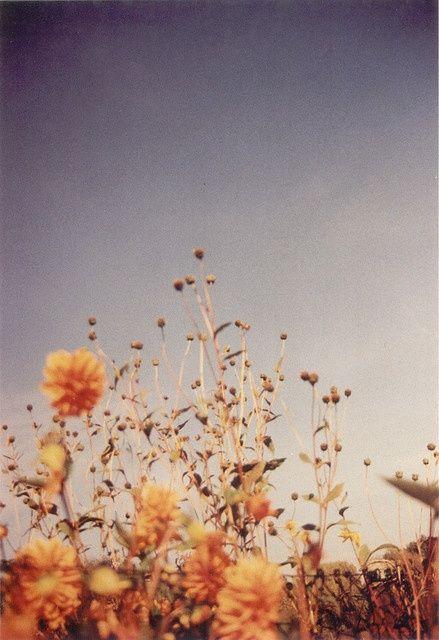 wild flowers among weeds