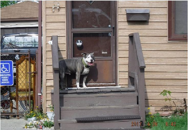 18++ Animal welfare chicago ridge ideas