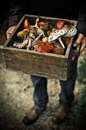 Wild mushrooms by -Mónica Pinto {Pratos e Travessas}- #flickstackr Flickr: https://flic.kr/p/PHq37M