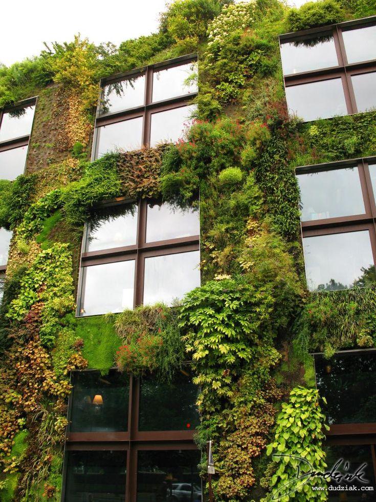 Les 31 meilleures images du tableau mur végétal sur Pinterest ...